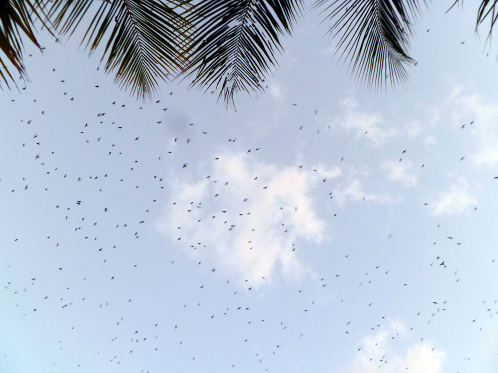 Birds Flying back to Franklin´s Island